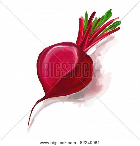 beet vector illustration  hand drawn  painted watercolor