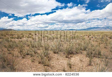 Salt Steppe