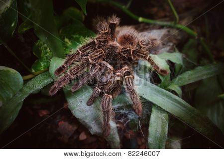 spider in the wild