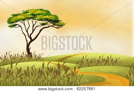 Illustration of a single tree on a hill
