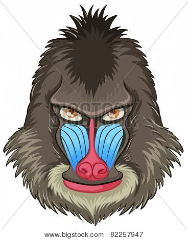 Illustration of a mandrill baboon head
