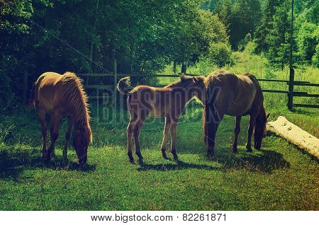 Bay horses grazes in the mountains