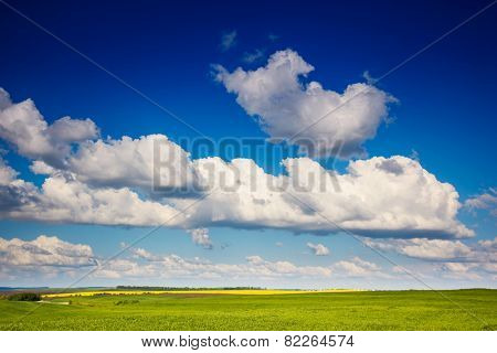Beautiful sunny day in the field with white fluffy clouds. Overcast sky. Ukraine, Europe. Beauty world.