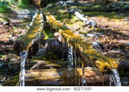 Forest Spring, Lake Baikal