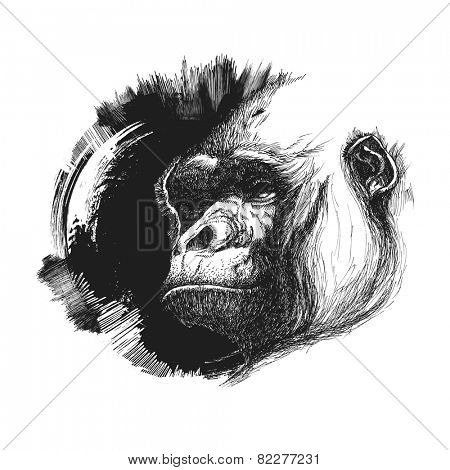 Ape head logo in black and white. Vector illustration