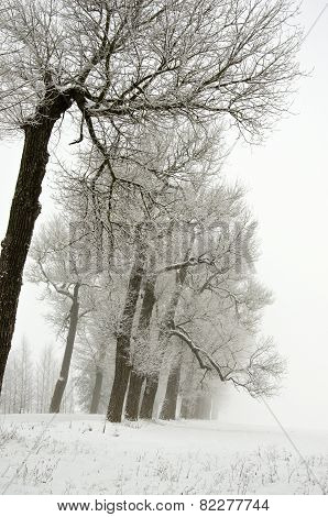 Winter Landscape With Old Road Tree Alley And Fog