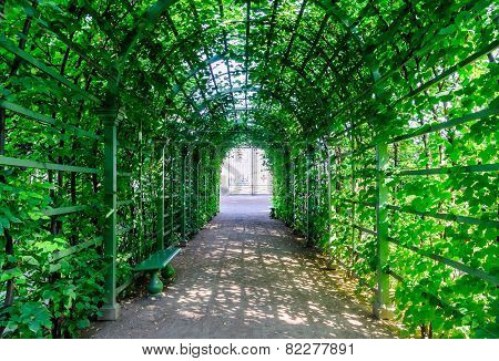 Beautiful green tunnel from plants