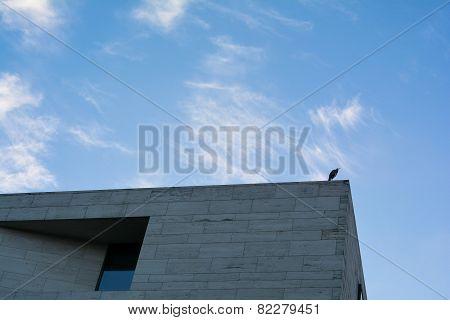Heron in Berlin