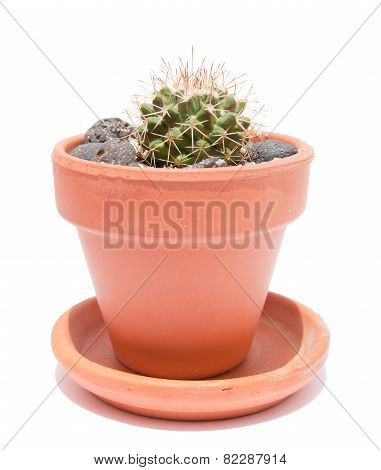Small Cactus In A Terracotta Pot
