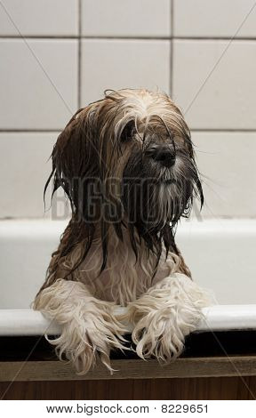 Funny Puppy After Bathing
