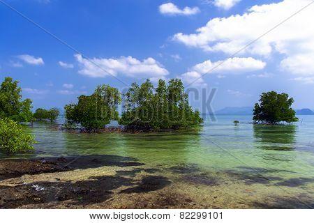 Mangroves Trees.