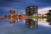 picture of labradors  - Australian suburb in front of water at night  - JPG