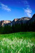 Yosemite National Park, USA poster