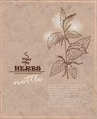 picture of nettle  - Vintage background with nettles on old paper - JPG