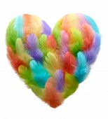 picture of feathers  - Valentines Heart shaped made of colorful feathers on white background - JPG