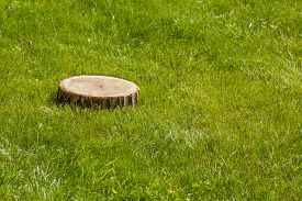 image of disafforestation  - tree stump on the green grass - JPG