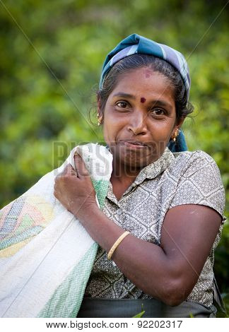 MASKELIYA, SRI LANKA - JANUARY 6 : Female tea picker in tea plantation in Maskeliya, January 6, 2015. Directly and indirectly, over one million Sri Lankans are employed in the tea industry.