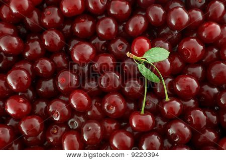 Red Cherries Background