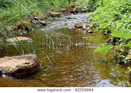 River stream in a forest. Beautiful summer landscape.
