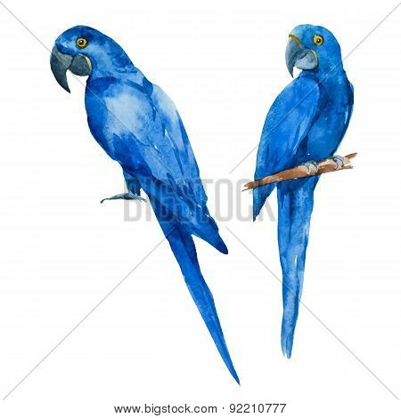 Nice watercolor blue parrots
