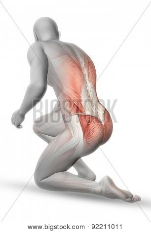 3D male medical figure with partial muscle map in kneeling position