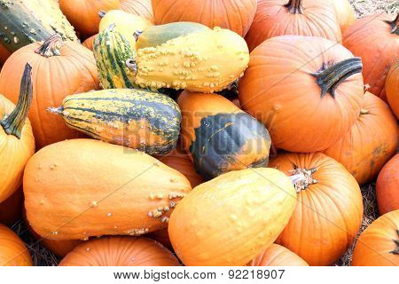 Giant Bumpy Pumpkin