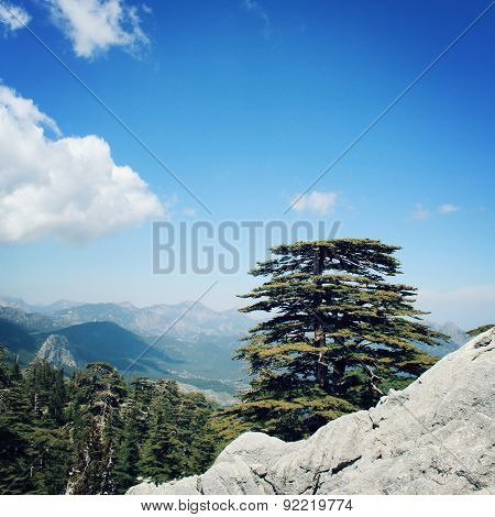 Pine Trees And Rocks On The Blue Sky. Retro Photo. View On The Valley.