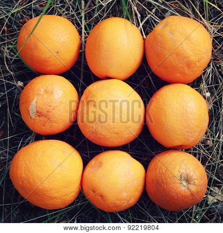 Fresh Oranges On Display. Harvest In Turkey.