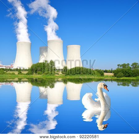 Swan on the pond in the background Nuclear power plant