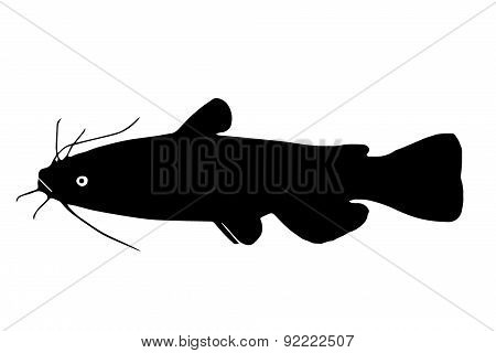 Silhouette Of The Fish Brown Bullhead