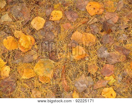 Yellow Leaves And Needles, Autumn Background, Texture