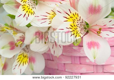 Bouquet of alstroemeria  in wicker basket