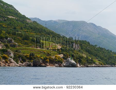 Small afgriculture on Peljesac in Croatia