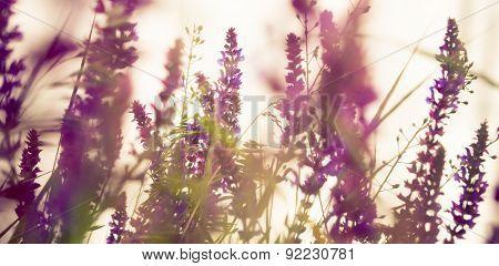 Flower Background. Summer Meadow.