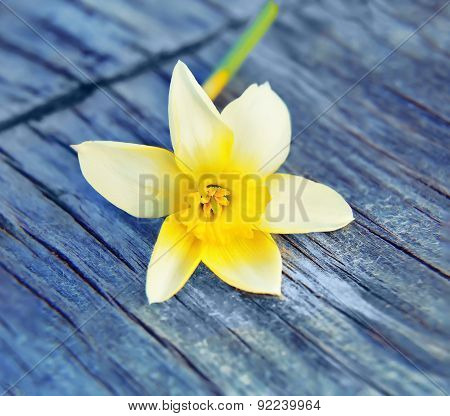 Picture Spring Flower narcissus daffodils