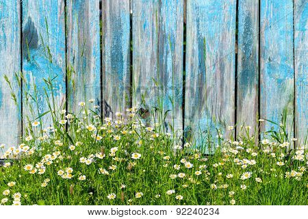 Daisy flowers on a background of wooden fence