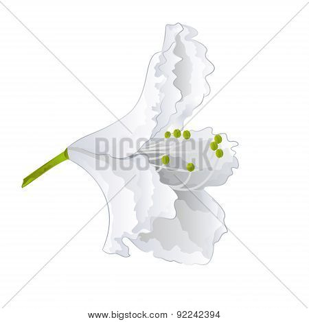 White Flower Simple Rhododendron Vector