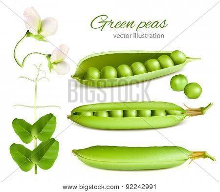 Green peas. Vector illustration