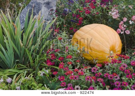 Pumkin And Rock With Flowers