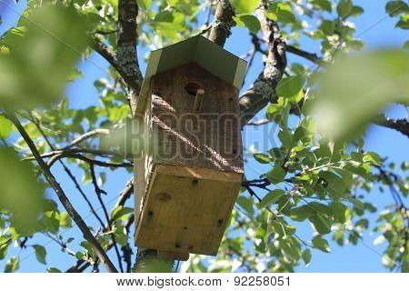 A nesting box. Summer in Leningrad Region, Russia