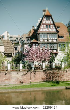 Beautiful Magnolia Tree, Traditional Alsatian House In The Historic District In Strasbourg