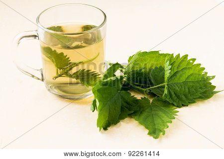 Fresh Nettle Tea For Herbal Medicine And Green Leaves