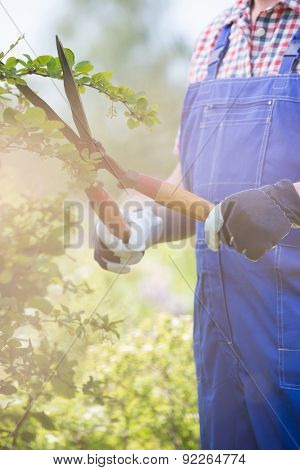 Midsection of gardener trimming branches at plant nursery