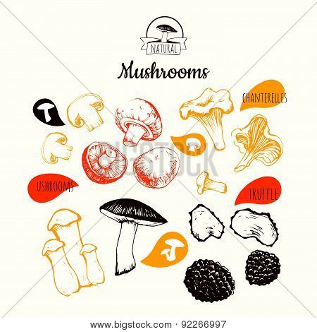 Vector Illustration On White Background. Hand Drawing Set Of Mushrooms.
