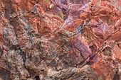 foto of petrified  - Close up of a Tree Trunk at the Petrified Forest National Park in Arizona - JPG