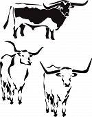 stock photo of cattle breeding  - longhorn cattle  - JPG