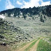 picture of wild turkey  - Road in high mountains - JPG