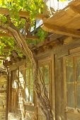 pic of unnatural  - Stylish old house closeup with vine closeup - JPG