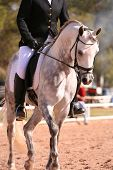 stock photo of dapple-grey  - grey arabian dressage show horse competing in dressage - JPG