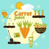 picture of carrot  - Vector garden illustration in flat style - JPG